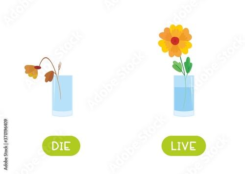 Fotografie, Obraz Die and live antonyms word card vector template