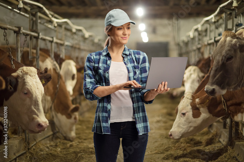 Female worker on a cow dairy farm in a cowshed working on a laptop computer Poster Mural XXL