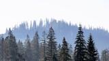 piękny widok na polskie góry i lasy