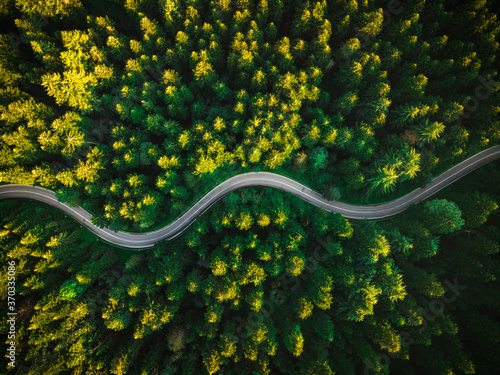 Photo Curvy Road in Summer Pine Forest