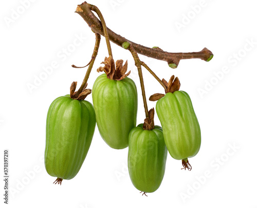 Photo Branch with actinidia fruits isolated on a white background