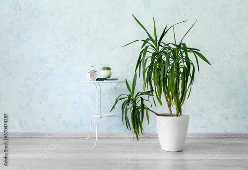 Obraz Interior of modern room with houseplant and table - fototapety do salonu
