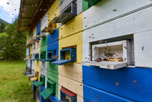 Bee Hives In Production Mode