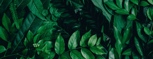 Abstract Green Leaves Nature T...
