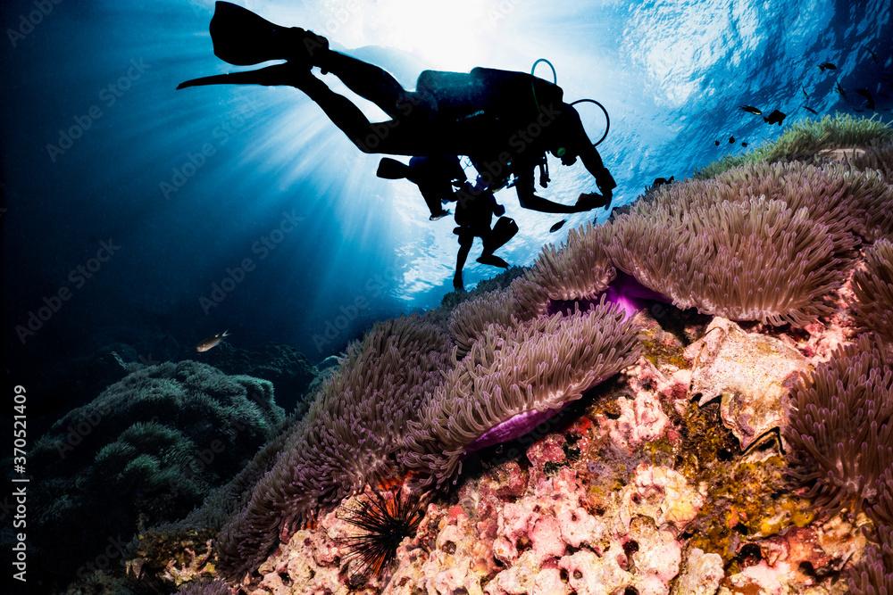 Fototapeta silhouette of scuba diver swimming over coral reef