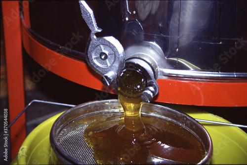 Fotografie, Obraz Die mit Honig gefuellten Waben werden in einer automatischen Radialschleuder entleert