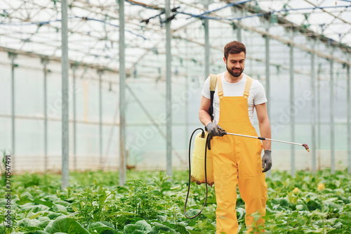 Fototapeta Young greenhouse worker in yellow uniform watering plants by using special equip