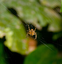 Along Came A Spider, Strumming Her Web.