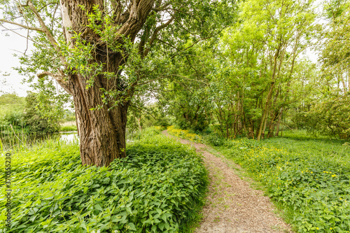 Photo Unpaved footpath with shredded branches along river Kromme Aar with roadsides fu
