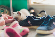 A Small Kitten Climbed Into Women's Pink Shoes. A Small, White Kitten Plays With Shoes.