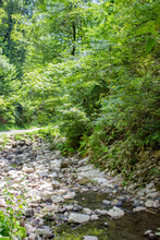 Picturesque Mountain Landscape. Dry Riverbed With Large Stones. Around The Lush Green Vegetation.