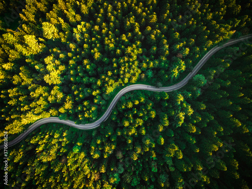 Canvas-taulu Summer Pine Forest and Winding Curvy Road