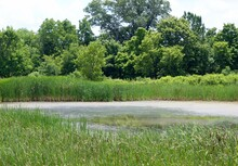 A View Of The Pond Over The We...