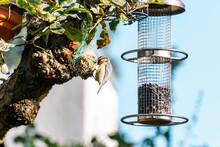 Bird Sitting On Tree Next To Feeder In Garden In Sunny Weather