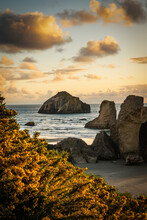 Beautiful Sunset Over Famous Face Rock In Bandon, Oregon. Gorse Bloom In Foreground.
