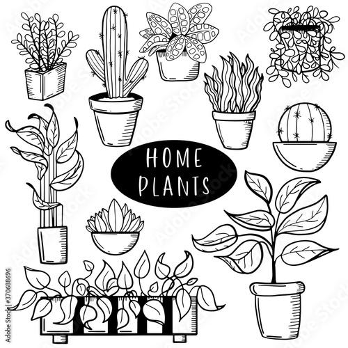 Photographie Pot plants set, vector illustration flowers in pots drawn black line on a white background, hand-drawn design elements
