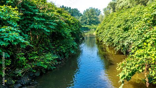 niedostępny odcinek rzeki Szotkówka w gminie Godów na Śląsku. Polska - fototapety na wymiar