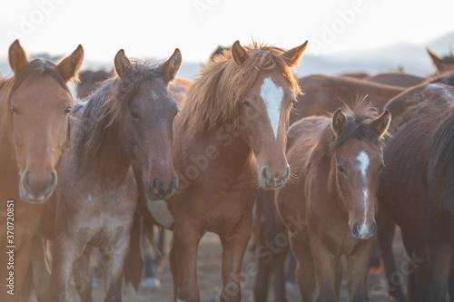 Photo Horses, Kayseri, Turkey