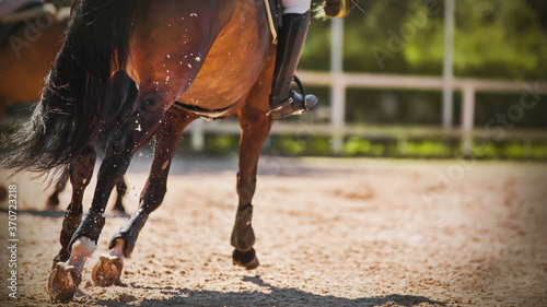 Foto A horse is galloping across the sand, its shod hooves kicking up dust in the air on a sunny summer day
