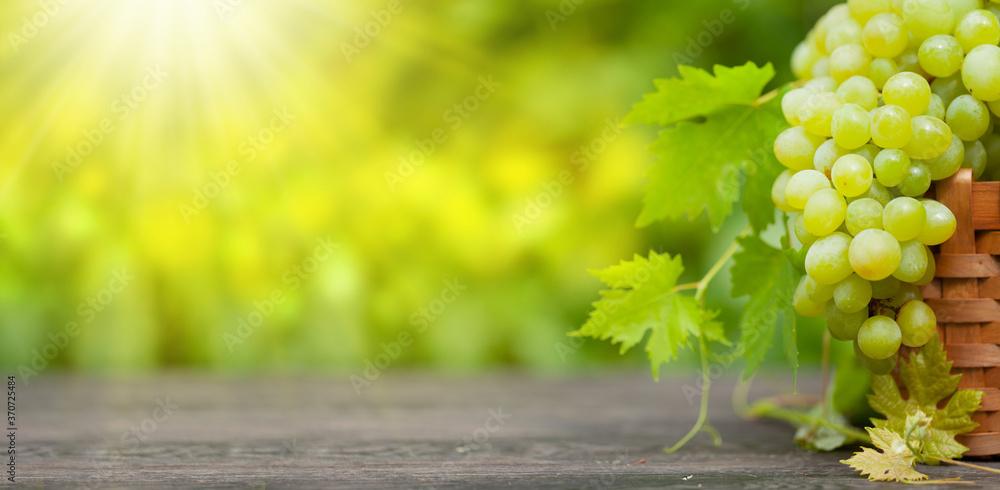 Ripe white grape on wooden table in vineyard