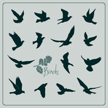 Set Of Birds Silhouettes - Fly...