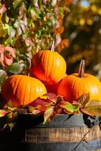 Colorful Pumpkins And Gourds O...
