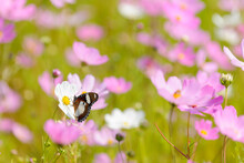 A Butterfly On Beautiful Pink ...
