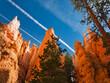 canvas print picture - Mammutbäume zwischen den rot orangen Bergspitzen