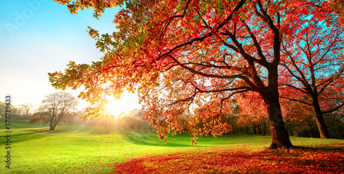 Fototapety pomarańczowe  sunny-park-in-glorious-autumn-colors-with-clear-blue-sky-and-the-setting-sun-a-vast-green