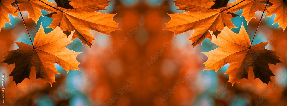 Fototapeta Red maple leaves on the branches - obraz na płótnie