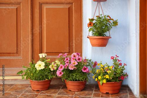 Beautiful petunia flowers in pots on steps near front door Fototapet