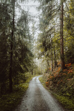 Picturesque Scenery Of Woods W...