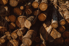 Pile Of Timber Trunks Stacked In Forest During Sunny Day In Biscay