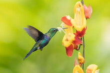 Wonderful Green Bird On Flower