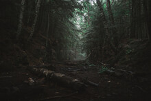 Gloomy Forest Landscape With O...