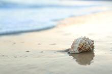 Beautiful Seashell On Sandy Be...
