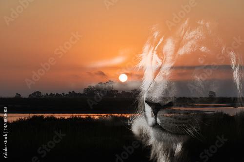 Gorgeous Wetland Sunrise With Lion Silhouette Portrait Fototapet