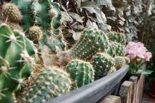 Various Cacti In A Pot With De...