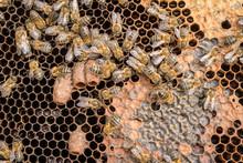 Queen Bee Cones In Honeycomb