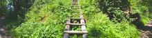 Overgrown Ladder Made Of Wood....