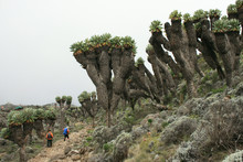 Trail To Kilimanjaro, Tanzania...