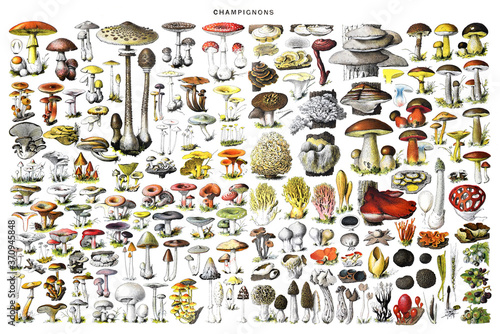 Obraz na plátně Big Mushroom collage with all different mushrooms