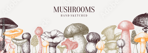 Fototapeta Vintage mushrooms banner. Edible mushrooms vector background. Hand drawn food drawings. Forest plant sketches.  obraz