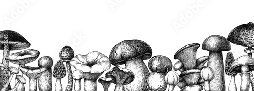 Fototapeta Vintage mushrooms banner. Edible mushrooms vector background. Hand drawn food drawings. Forest plants sketches. Perfect for recipe, menu, label, icon, packaging,  Botanical template obraz