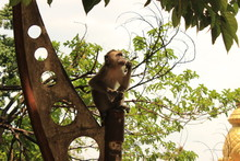 A Monkey Eating Some Food At T...