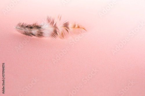 Photo Delicate fluffy bird feather on a light violet background