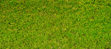Green Moss Background Texture Wallpaper