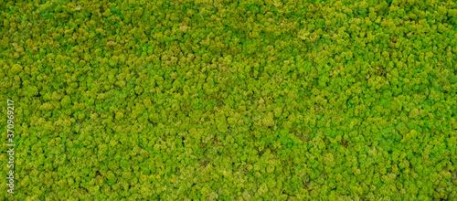 Canvas Print green moss background texture Wallpaper
