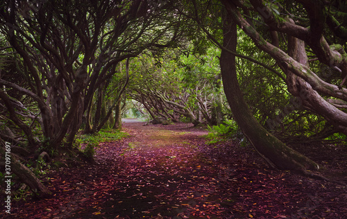 Photo The rhododendron path to the second lake at Craig y Nos Country park in the Swansea Valley, South Wales UK
