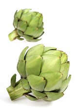 Camus Artichoke, Cynara Scolymus, Vegetable Against White Background